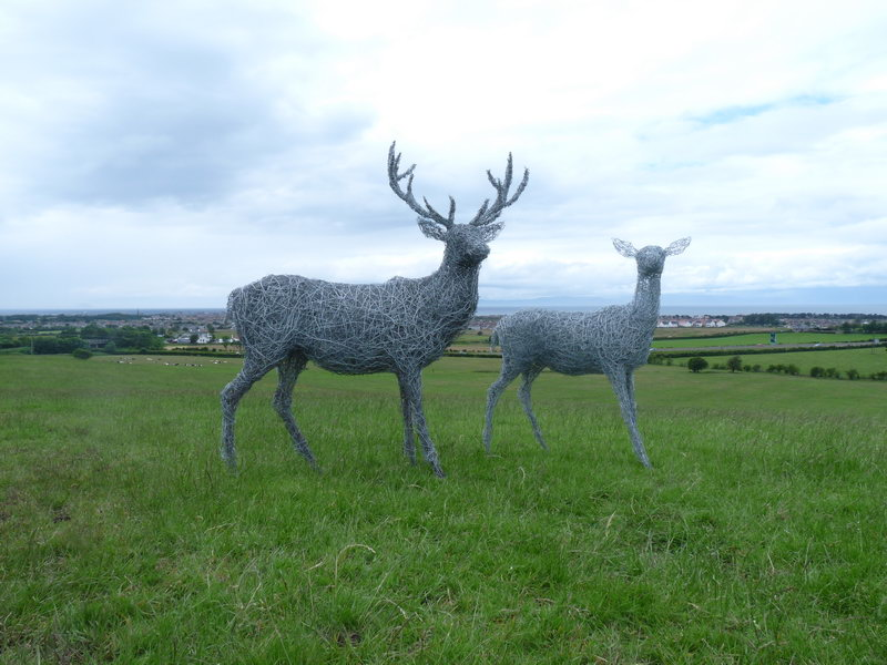 25.  Wire stag and doe on the hill, Ayrshire 200
