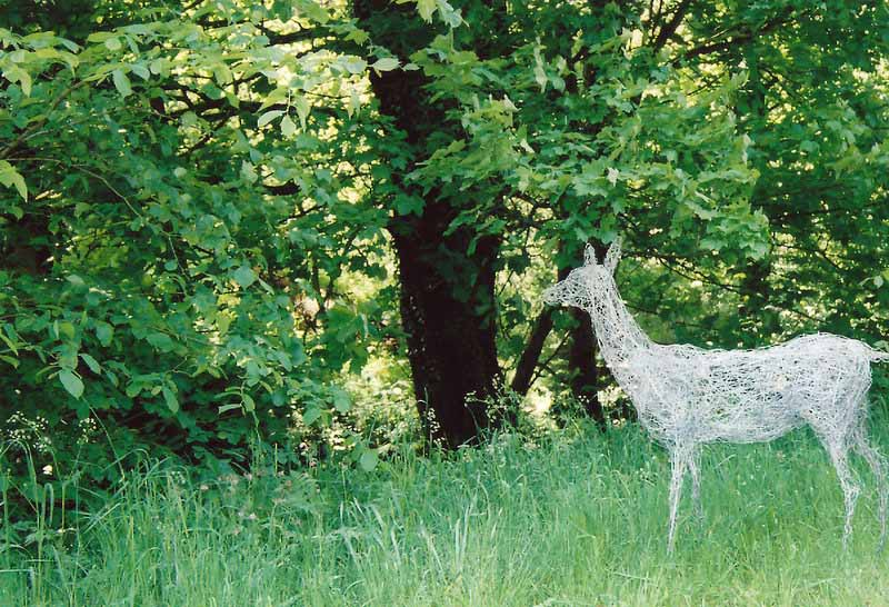 3. Wire doe appears in the forest, 1998