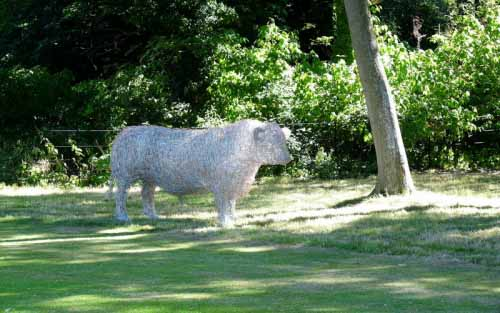 6. Wire cattle Aberdeen Angus sculpture in the shade