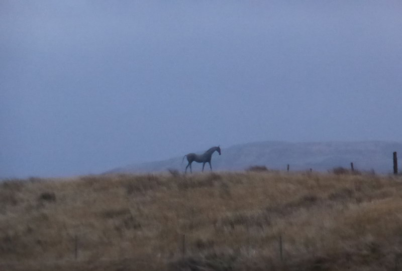 17. Wire horse on the moor in Oban, 1998