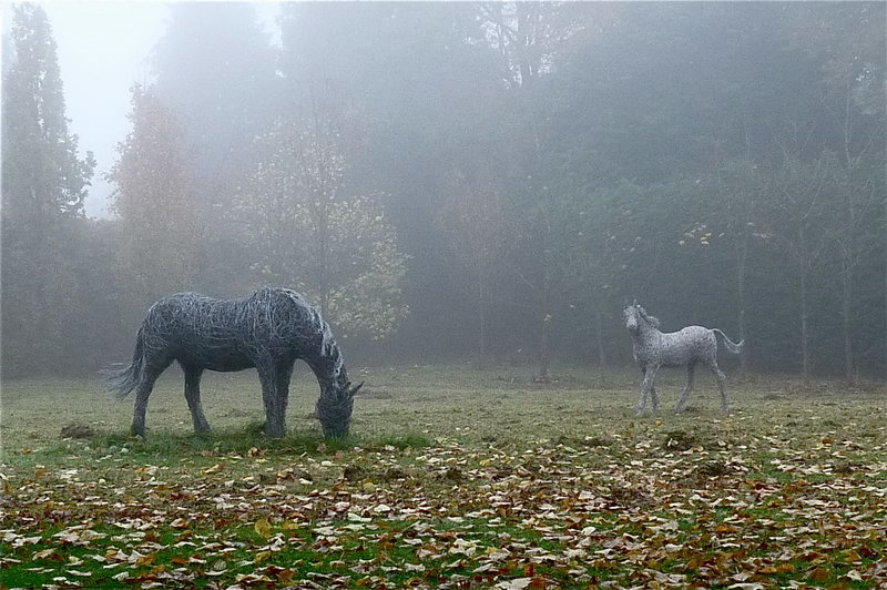 5. Misty meadow - wire mare and foal catch the morning light