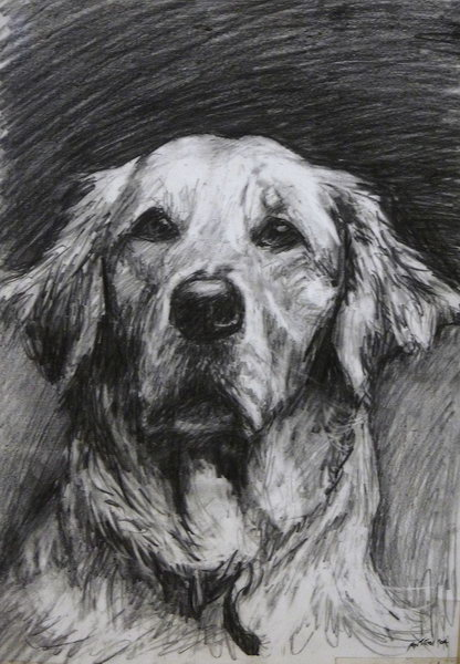9. Golden Retriever portrait drawing (pencil)