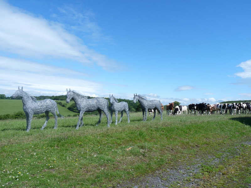 28. Wire horses pursued by a herd of curious cows, 2011