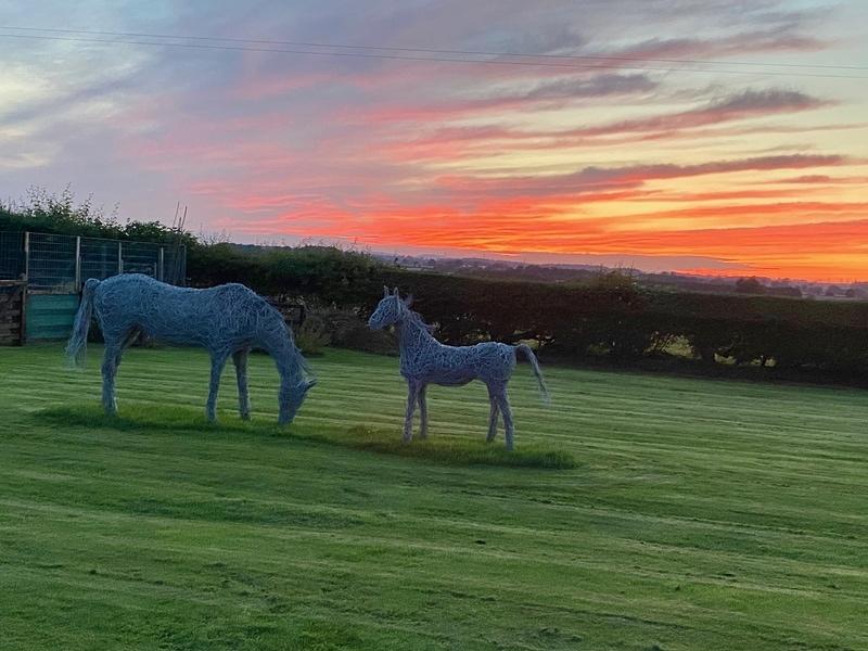 Sunset horses.